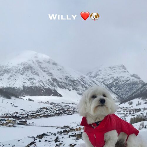 willy_14_03_21