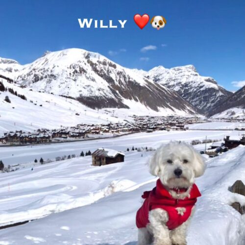willy_21_03_21