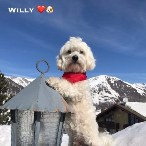 willy_28_marzo_2021