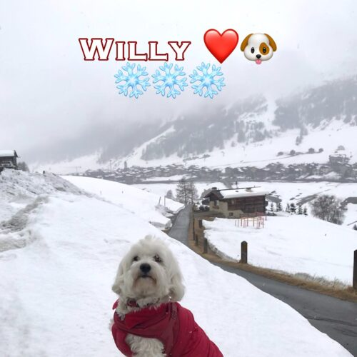 willy_11_aprile_2021