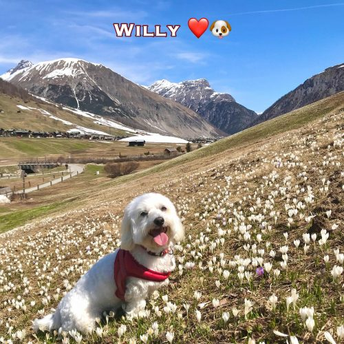 Willy 09-05-21