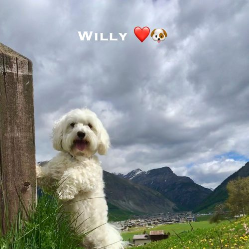 Willy 13-06-21