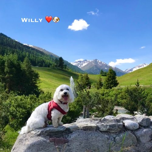 Willy 27-06-21