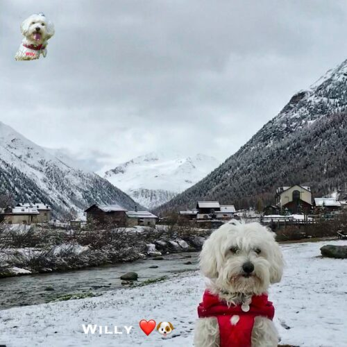 willy_02_05_21
